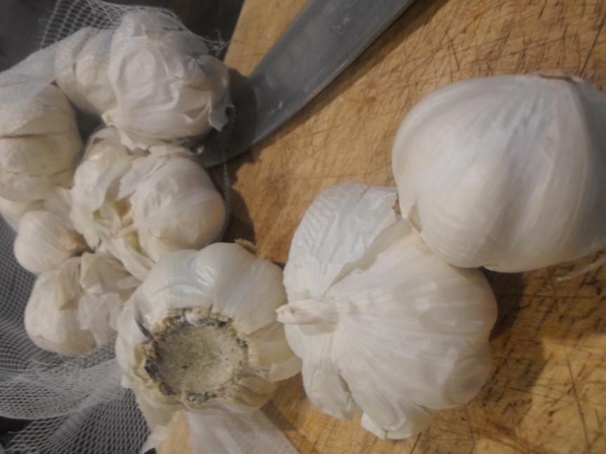 things about garlic
